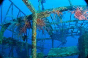 arecent wreck lying close to the T430 minesweeper, she is becoming a colourful wreck